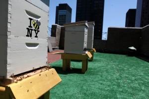 apiculture en ville
