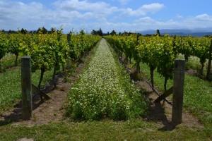 viticulture_biologique