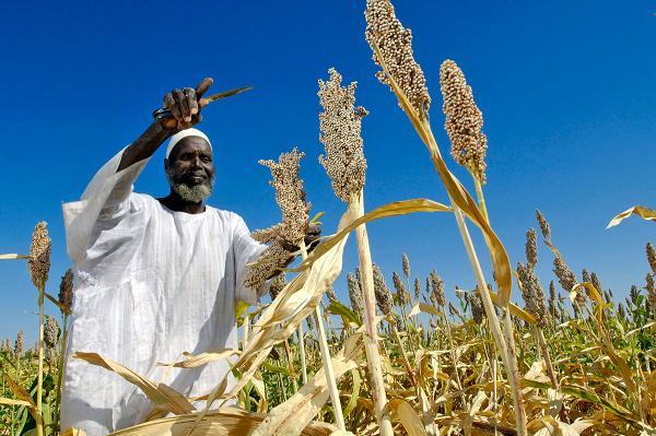 afrique mise sur son agriculture